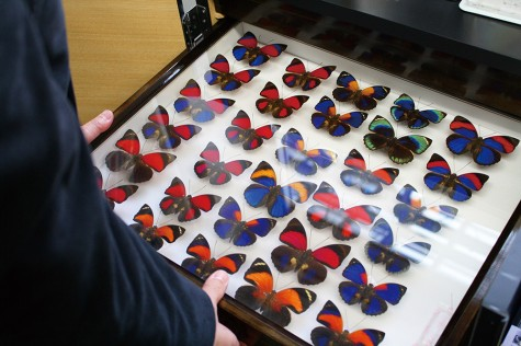Professor Aihara's butterfly collection. The generation of patterns on their wings is another source of raw material for chaos engineering.