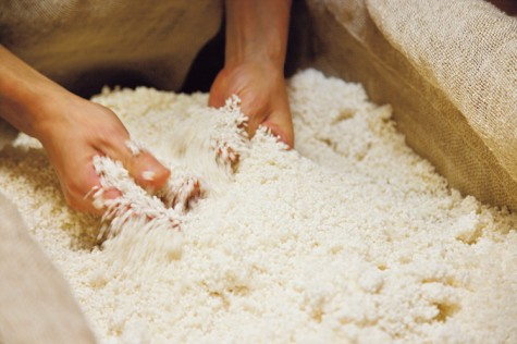 Adding mold spores to steamed rice to make koji