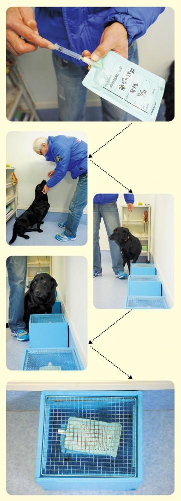 Experiment setup for dog cancer detection