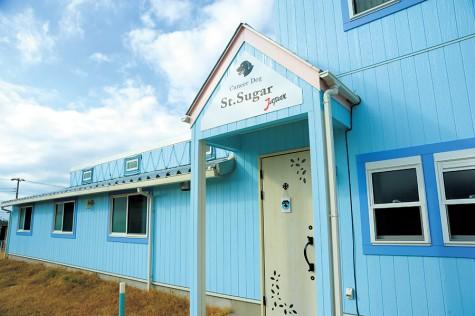 St. Sugar Japan Cancer Sniffing Dog Training Center