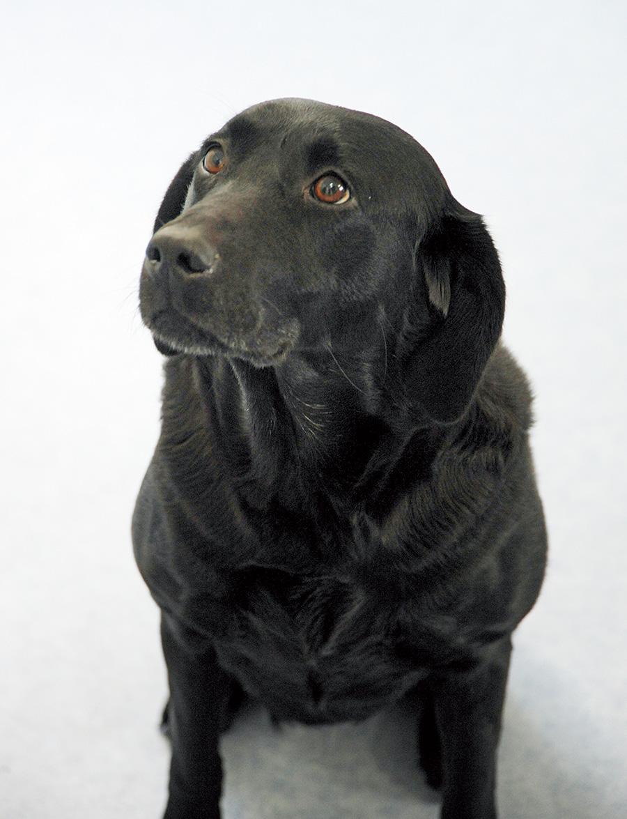 The dog Esper, a clone of Marine